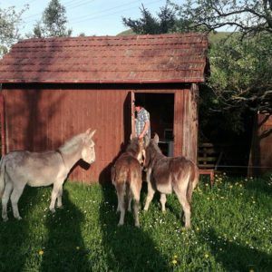 Neues Esel-Hotel auf dem Schwillehof