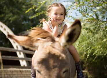 Pony- oder Eselreiten auf dem Schwillehof