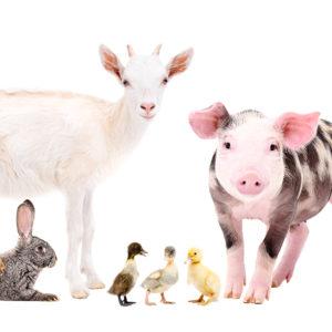 Tiere erleben auf dem Schwillehof